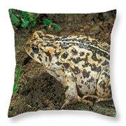 California Toad Bufo Boreas Halophilus Throw Pillow
