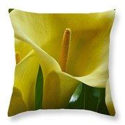 Calla Lily 1 Throw Pillow