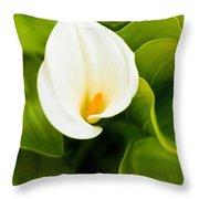Calla Lily Plant Throw Pillow