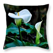 Calla Lily - Zantedeschia Aethiopica Throw Pillow