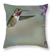 Calliope Hummingbird  Throw Pillow