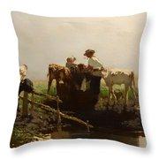 Calves At A Trough Throw Pillow