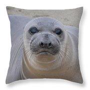 Cambria Baby Seal Throw Pillow