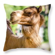 Camel Portrait Throw Pillow