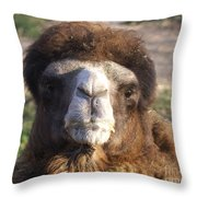 Camel Face Throw Pillow