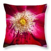 Camellia Throw Pillow by Carolyn Marshall