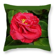 Camellia Japonica ' Dixie Knight ' Throw Pillow