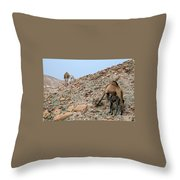 Camels At The Israel Desert -1 Throw Pillow