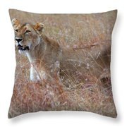 Camouflaged Female Lion In Grass Throw Pillow