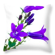 Campanula Flowers Throw Pillow