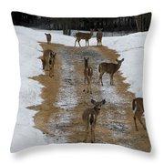 Can Deer Read Throw Pillow