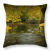 Canada Geese In Autumn Swimming On The Thornapple River Throw Pillow