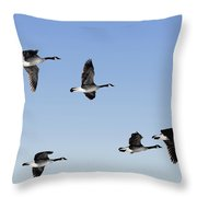 Canada Geese In Flight, Algonquin Park Throw Pillow