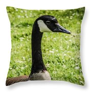 Canada Goose 2 Throw Pillow