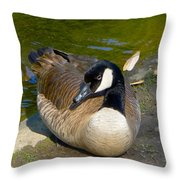 Canada Goose Sitting Pretty Throw Pillow