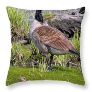 Canada Goose With Young Throw Pillow