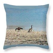 Canadian Geese 2 Throw Pillow