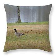 Canadian Geese Tourists Throw Pillow