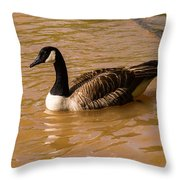 Canadian Goose In On Golden Pond Throw Pillow