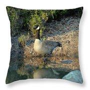 Canadian Goose Reflection Throw Pillow