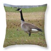 Canadian Goose Strut Throw Pillow