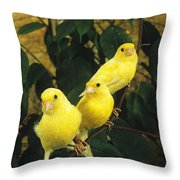 Canari Jaune Throw Pillow