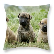 Canary Dog Puppies Throw Pillow