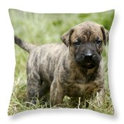 Canary Dog Puppy Throw Pillow