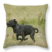 Canary Dog Running Throw Pillow