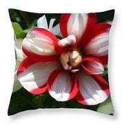 Candy Cane Dahlia Throw Pillow