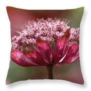 Botanica .. Candy Throw Pillow