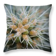 Cane Cholla Cactus Spines Throw Pillow