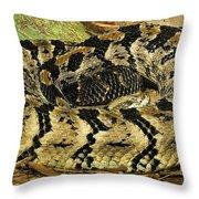Canebrake Rattlesnake Throw Pillow