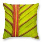 Canna Lily Red Stripe  Throw Pillow