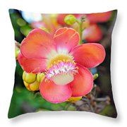 Cannonball Tree Throw Pillow