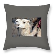 Cant Wait For Hump Day Throw Pillow