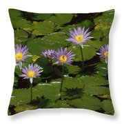 Cape Blue Water-lily Group Blooming Throw Pillow