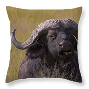 Cape Buffalo   #0574 Throw Pillow