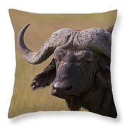 Cape Buffalo   #0607 Throw Pillow