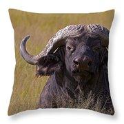 Cape Buffalo   #0609 Throw Pillow