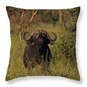 Cape Buffalo   #6851 Throw Pillow