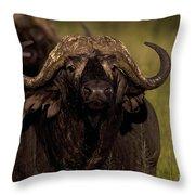 Cape Buffalo   #6883 Throw Pillow