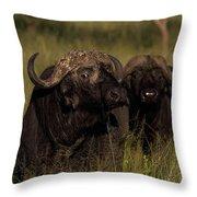 Cape Buffalo   #6884 Throw Pillow