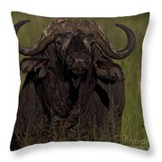 Cape Buffalo   #6885 Throw Pillow