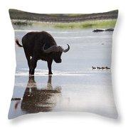 Cape Buffalo And Baby Eygptian Geese   #0375 Throw Pillow