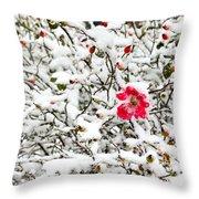 Cape Cod Beach Rose In Fresh Snow Throw Pillow