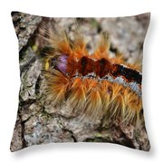 Cape Lappet Moth Caterpillar Throw Pillow