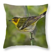 Cape May Warbler Throw Pillow