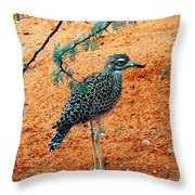 Cape Thick-knee Throw Pillow