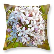 Capitate Valerian Near Savage River Cabin In Denali Np-ak Throw Pillow